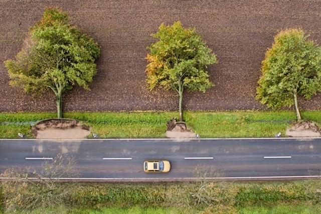 Oluja u Njemačkoj spljoštila je stabla