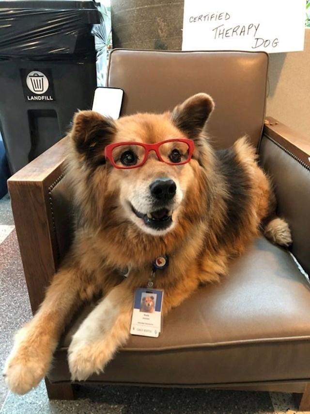 Terapijski pas koji izgleda kao da nam svima može pomoći svojim toplim pogledom :)