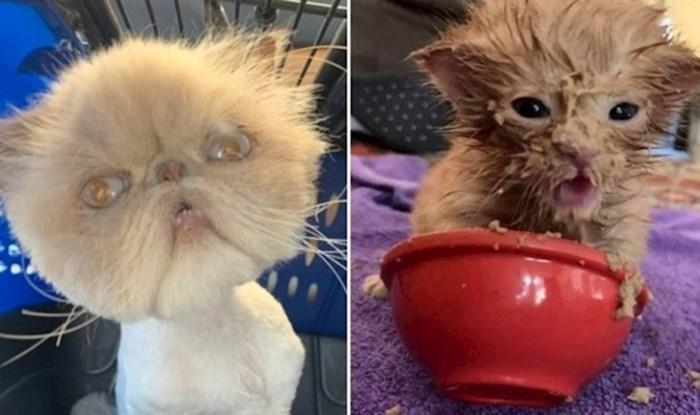 Ljudi dijele fotke svojih mačaka koje one sigurno ne bi odobrile