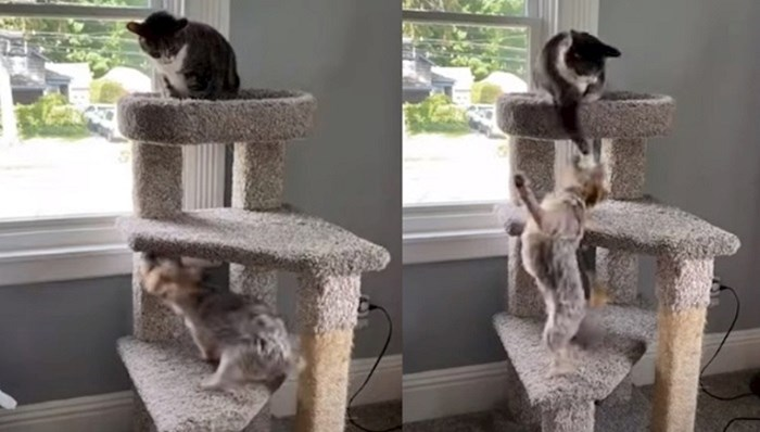 Pas se usudio popeti mački na penjalicu, ona je reagirala prilično agresivno, ali totalno urnebesno