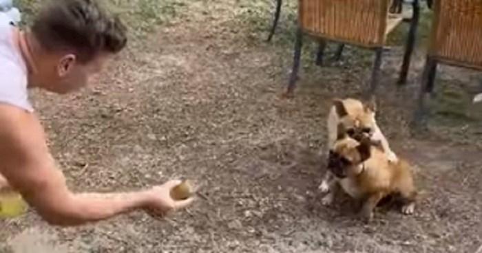 Ovaj pas je želio uhvatiti lopticu ali mu se nije dalo trčati, pogledajte što su ljudi snimili