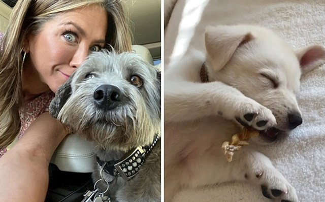Jennifer Aniston, Clyde i Lord Chesterfield