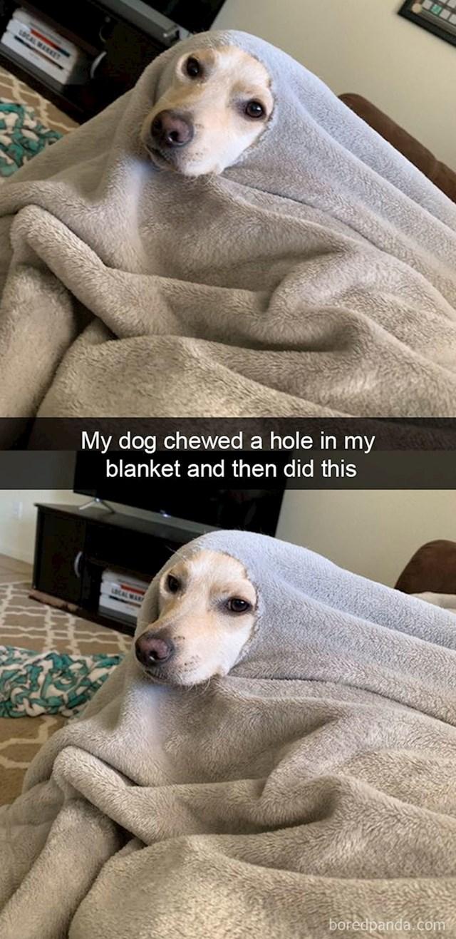 """""""Progrizao je deku i sad se ovako ponaša"""""""