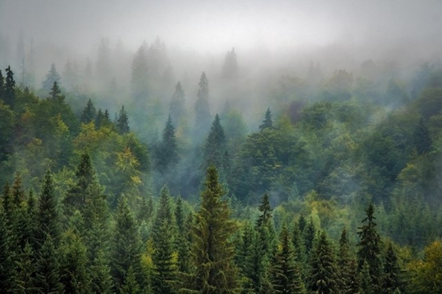 U Švedskoj se iz godine u godinu sadi sve više novih stabala