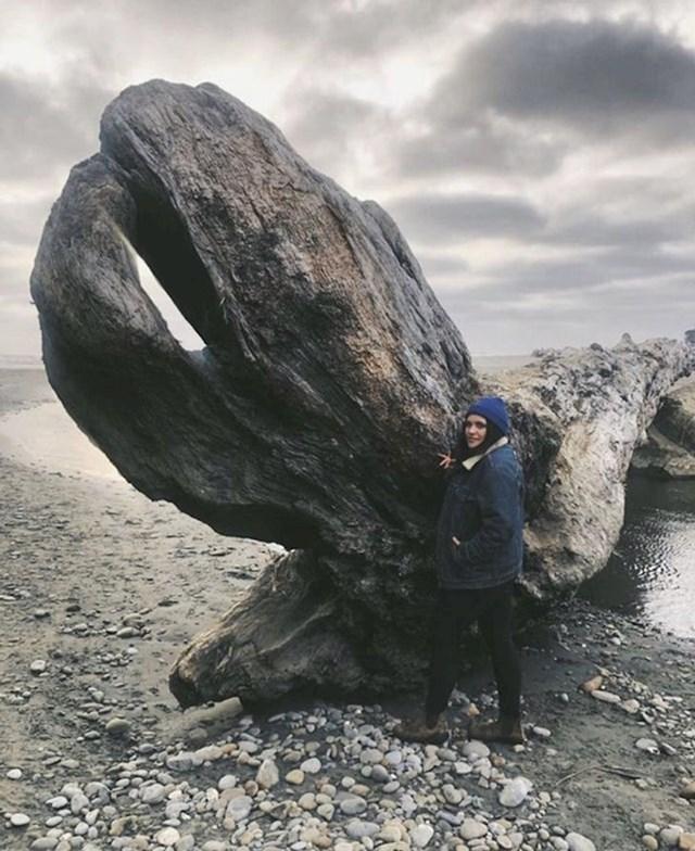 Kamen koji nalikuje glavi kornjače