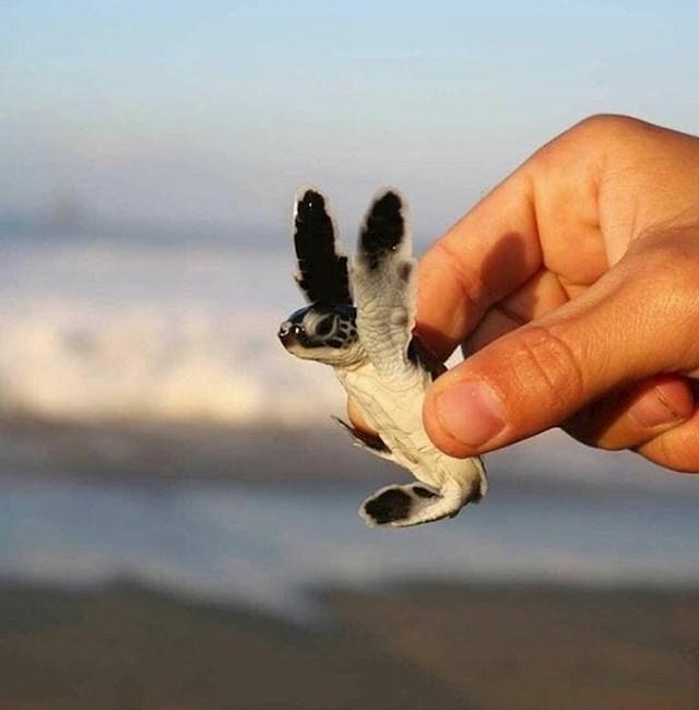 Nakon što su volonteri uklonili tone smeća s plaže Versova u Indiji, kornjače su se vratile nakon 20 godina