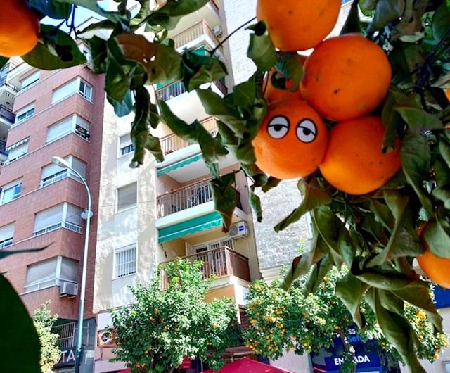 """""""Otkrio sam naranču s očima dok sam šetao Malagom u Španjolskoj"""""""