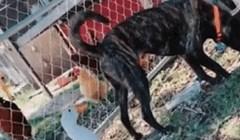 Pas je guski okrenuo leđa, ona mu na urnebesan način pokazala što misli o tome