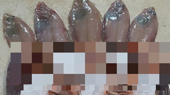 Fotka sa splitske tržnice oduševila internet, pogledajte što je netko napravio od morskih plodova