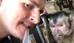 Ovom majmunu nije jasno što njegov vlasnik radi, ovo je urnebesno