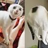 Ljudi su fotkali svoje mačke koje su prave kraljice drame, fotke su urnebesne