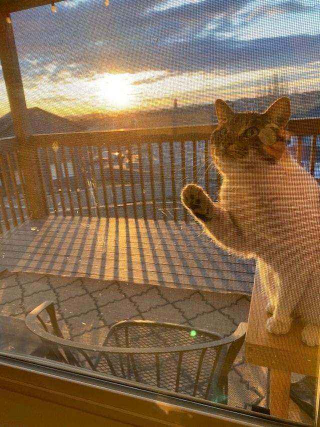 """""""Otkrila sam da moja mačka svako jutro promatra izlazak sunca"""""""
