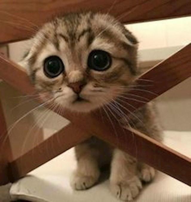 Znatiželjna mačkica
