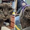 Ova slatka maca bez ušiju napokon je udomljena