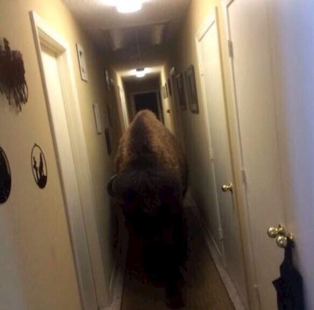 """""""Zaboravio sam da je mama kupila bizona, jako sam se prestrašio."""""""