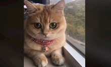 VIDEO Ova mačka zbog ogromnih očiju osvojila je cijeli internet