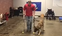 Psa izbacili iz škole za obuku pasa jer je bio katastrofalan, pogledajte kakve gluposti je izvodio
