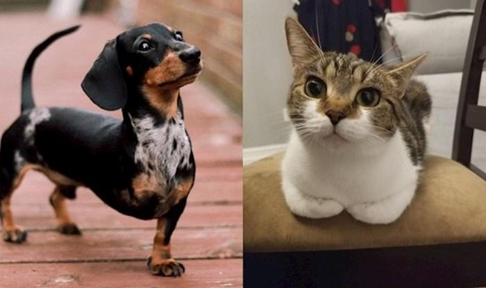 Napuštene životinje koje su dobile svoje ljude i sada su najsretnije na svijetu