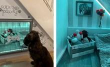 Vlasnica je svom psu uredila prostor ispod stuba, njemu se toliko svidjelo da ga ne želi napustiti