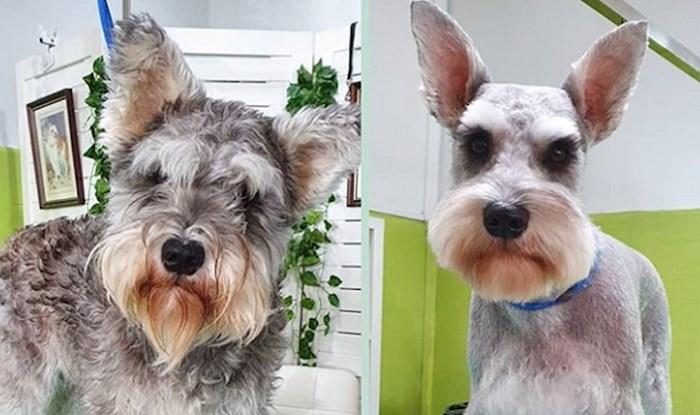 16 čupavaca koje je posjet salonu za šišanje pretvorio u sasvim druge pse