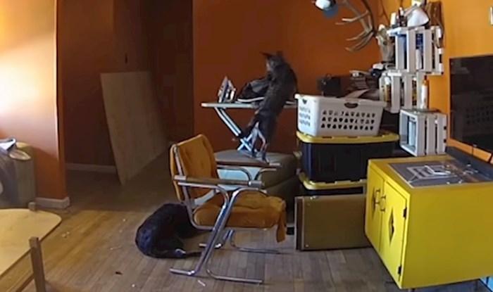 Kamera je snimila pse dok su se igrali i slučajno izazvali katastrofu koja je mogla završiti kobno