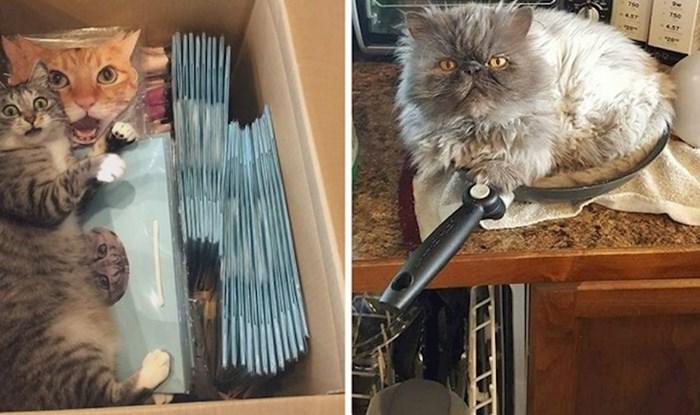 17 mačaka koje su svojim vlasnicima jasno dale do znanja da su one glavne u kući