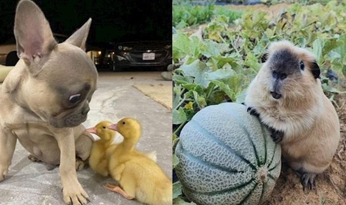 17 fotki preslatkih životinja koje će vam uljepšati prve dane jeseni