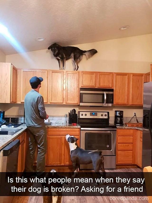 """""""Jel ovo znači da je pas pokvaren? Pitam za frenda"""""""
