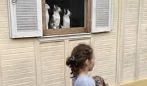 Snimka postala hit zbog tri mačke na prozoru, ovo je urnebesno