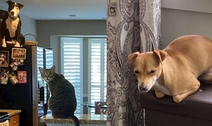 Psi koji misle da su mačke
