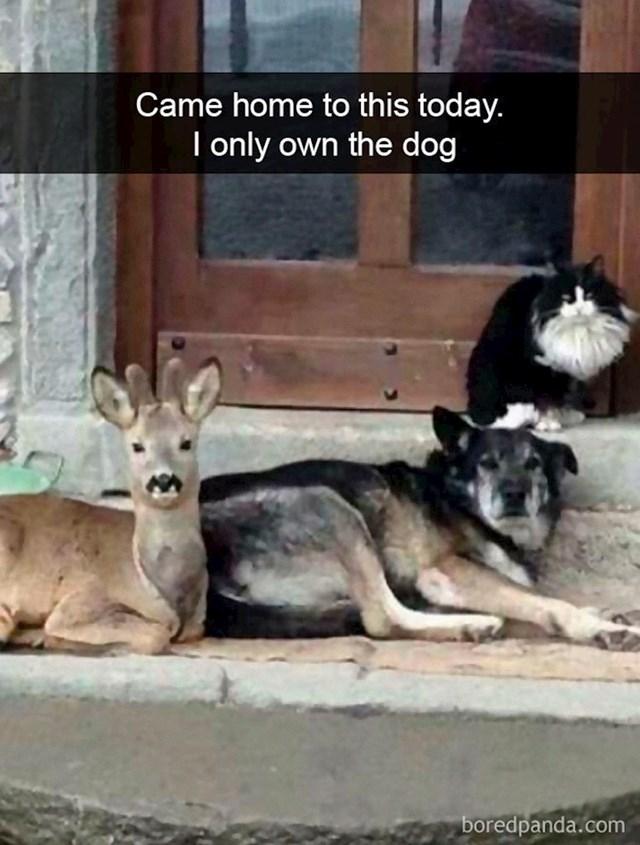 """""""Zatekao sam ovo kada sam došao doma sa posla, samo pas je moj"""""""