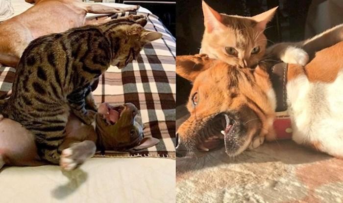 18 fotki zločestih mačaka koje maltretiraju jadne pse