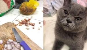65 urnebesnih i slatkih fotki mačaka koje jednostavno morate vidjeti