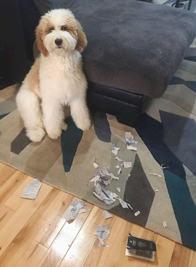 """""""Pas mi je pojeo putovnicu par dana prije puta"""""""