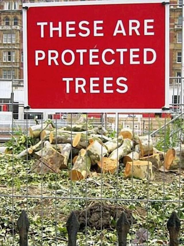 Zaštićena drva. Kako da ne.