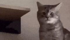 Kakva frikuša! Vlasnica je snimila svoju mačku koja se jako čudno ponaša