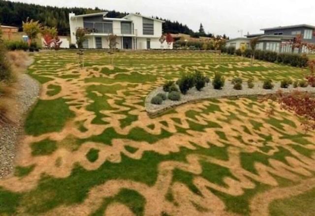 Kad greškom koristiš sprej koji uništava travu umjesto onog koji je hrani