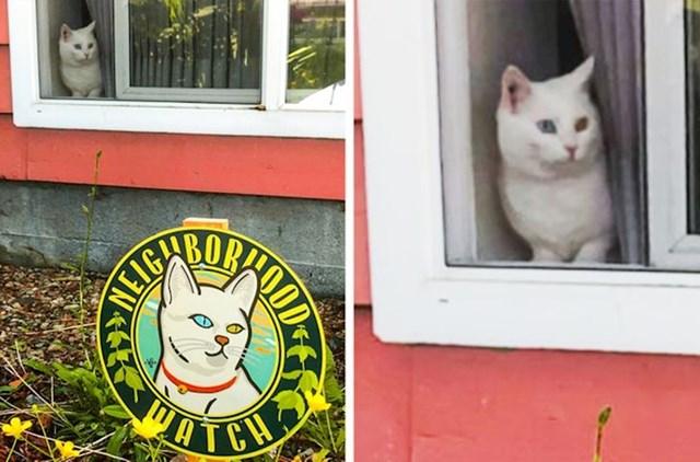 """""""Naša mačka uvijek ovako gleda tko prilazi našoj kući, pa smo joj nabavili naljepnicu na kojoj piše da je ona čuvar"""""""