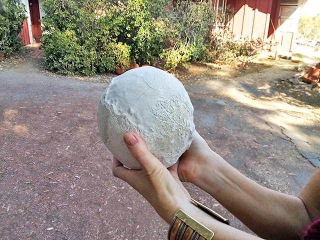 Kamen uklonjen iz žučnog mjehura konja