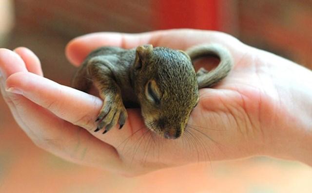Beba spava na dlanu