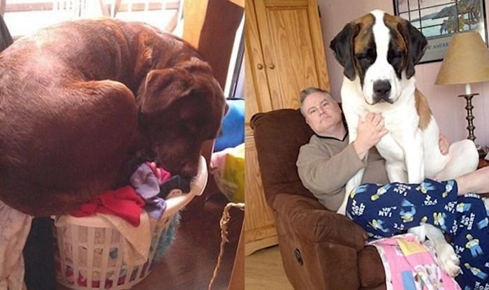 Psi koji misle da su još uvijek male bebe