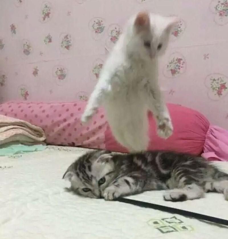 ogromni klinci u sićušne mačke seks s mojom djevojkom video