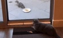 Nepozvana vjeverica pokušala je pojest mačkinu hranu, vlasnica je snimila urnebesnu scenu