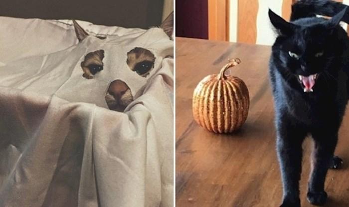 Ove mace su se totalno ufurale u Halloween raspoloženje