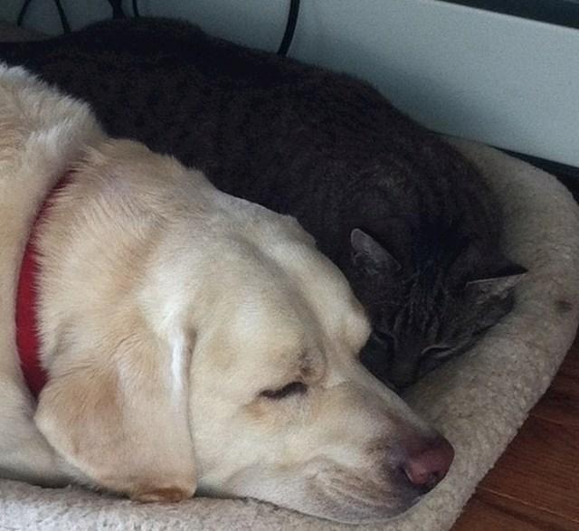 Ova hrabra kujica otjerala je medvjeda i tako spasila svoju vlasnicu i prijateljicu mačku