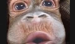 Ovaj majmun zapravo je nešto potpuno drugo što će vas nasmijati