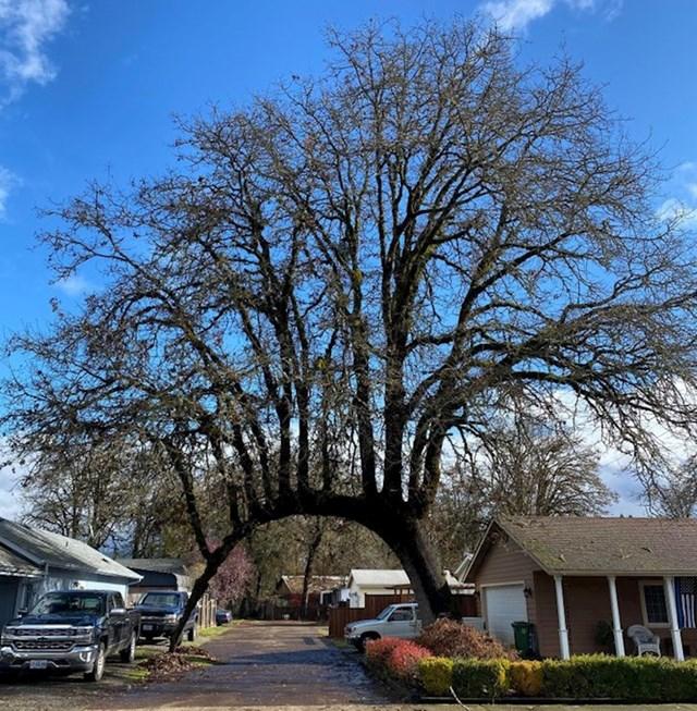 Neobično stablo