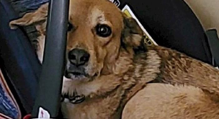 Nisu mogli pronaći svog psa u hotelu, kada su ga našli, nisu se mogli prestati smijati