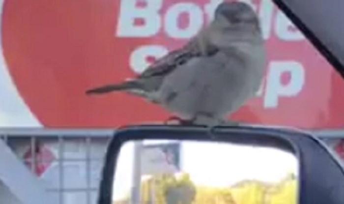 Ljudi nisu mogli vjerovati što vide, kakva je ovo ptica?