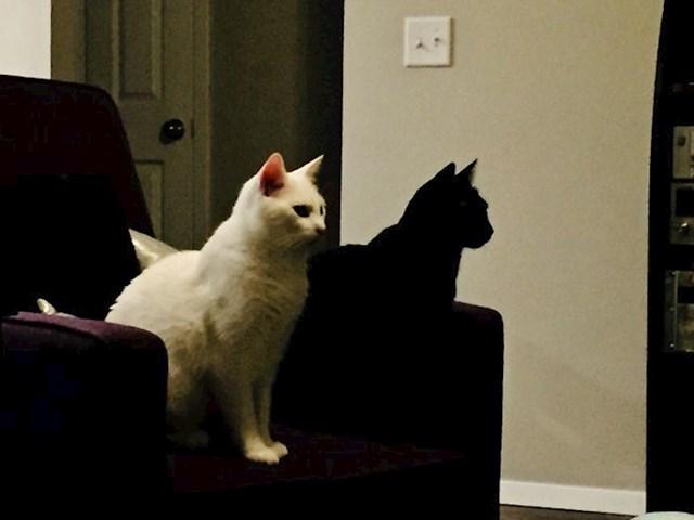 Mačka ili sjena?